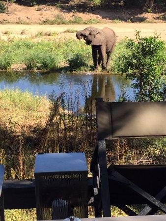 Timbavati Private Nature Reserve, Sør-Afrika: Good morning