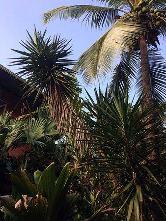 Kaya's Place: Jardin                                                                   Garden