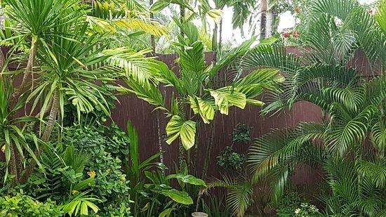 The Dusun: 20170525_091159_large.jpg