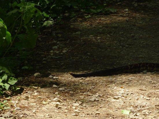 Linville Gorge : DSC00182_large.jpg
