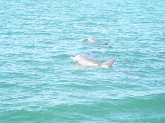 Sugarloaf Key, FL: dolphins spotted while on the boat
