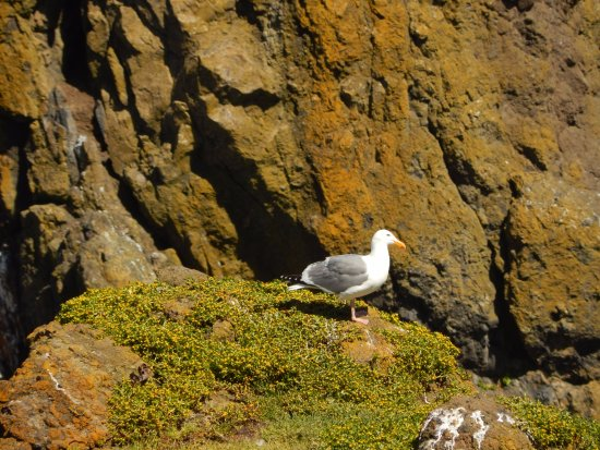 Yaquina Bay Lighthouse: seagull