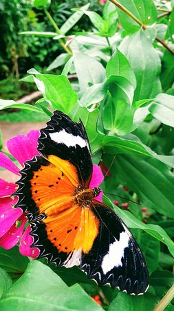 Colorful Butterflies Captured By My Camera Picture Of Kemenuh