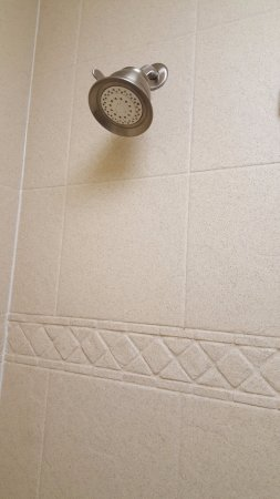 Good Shower head and wall covering but tub needs resurfacing ...
