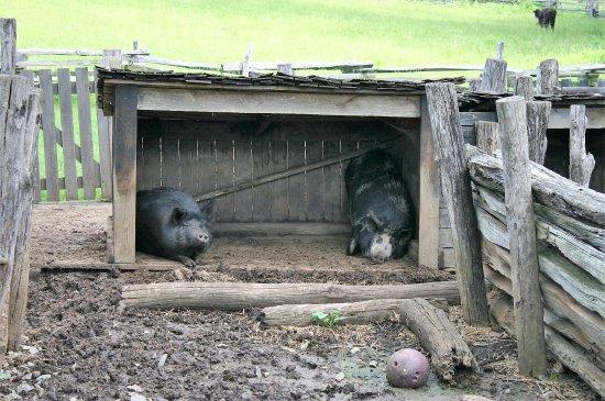 Hardy, VA: Hog Pen