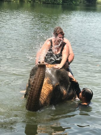 Kok Chang Safari Elephant Trekking : Fantastic ride in the water the elephants are so well trained and the keeps are perfect with the