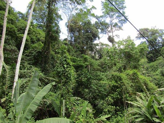 Veragua Rainforest Park: Rain forest
