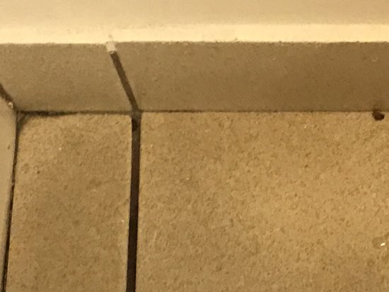 Best Western Mesquite Inn: Disgusting dirty floor in the bathroom during our entire stay..