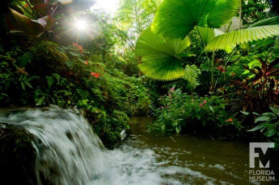 Butterfly Rainforest: The Rainforest features waterfalls and hundreds of living butterflies. Photo by Eric Zamora