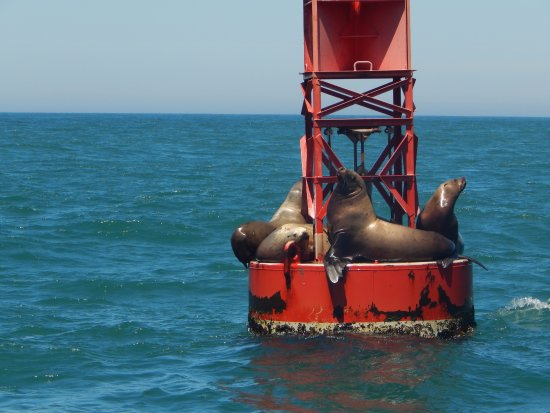 Dockside Charters: sea lions
