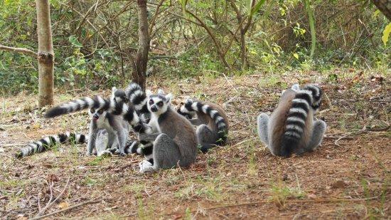 Lemurs Park : photo0.jpg