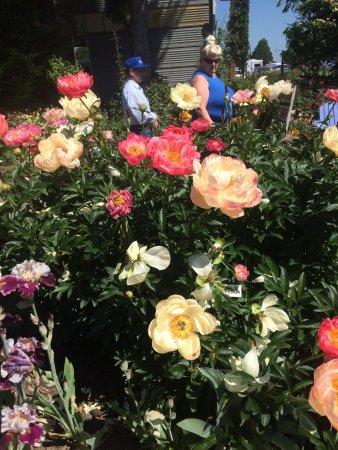 Schreiner's Iris Gardens : photo0.jpg