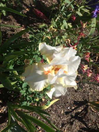 Schreiner's Iris Gardens : photo1.jpg
