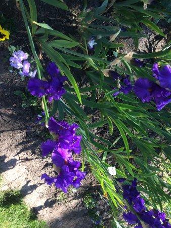Schreiner's Iris Gardens : photo2.jpg