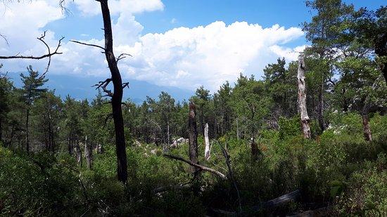 Adrasan, Turchia: Musa dağından bir görüntü. ağaçlardaki yanıklar yıldırım çarpması sebebiyledir.