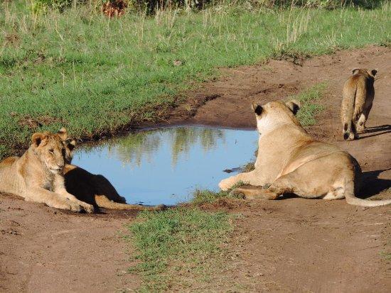 YHA Kenya Travel: Kenya Short Safaris, Kenya Tour holidays, Kenya Wildlife Safaris , Safaris Kenya, Kenya Safari T