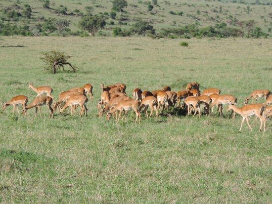 YHA Kenya Travel: Gazells, Kenya Wildlife Safaris , Safaris Kenya, Kenya Safari Tours, Masai Mara Kenya Safaris, K