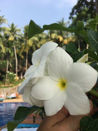Chowara, India: Прекрасный отель,зелёный