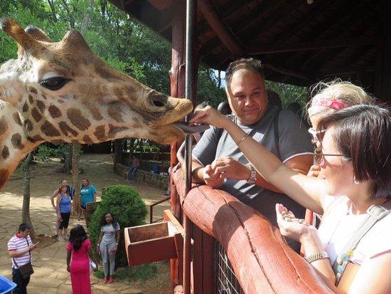 African Fund for Endangered Wildlife (Kenya) Ltd. - Giraffe Centre: photo0.jpg