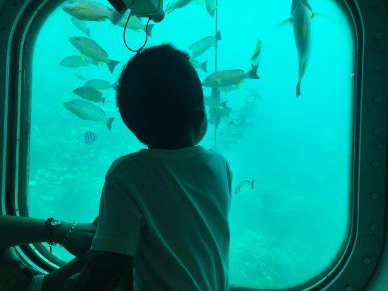 Fish Eye Marine Park: photo1.jpg