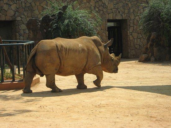 Changsha County, China: носорог