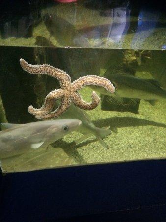 Ilfracombe Aquarium: photo0.jpg