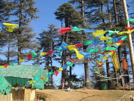Himalayan Roots Kanatal Campground Reviews Photos Rate Comparison Tripadvisor