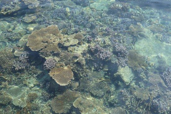 Karimunjawa, Indonesia: Pulau Cilik
