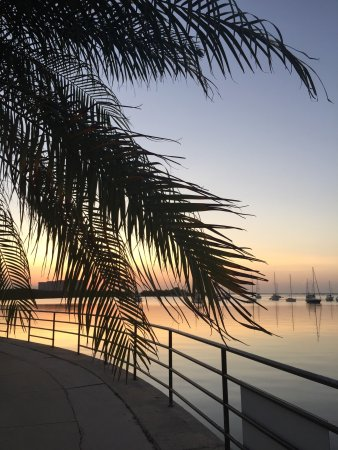 Sonesta Coconut Grove Miami: Vista desde la pileta