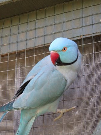 The Parrot Place: Every bird had its own personality, but all seemed happy, which was nice