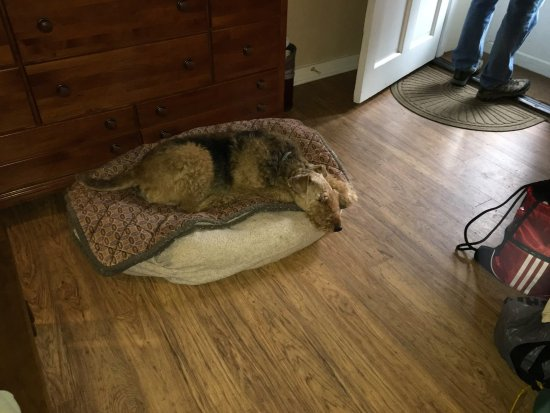 Lakeville, CT: dog beds provided by the inn and they like them.