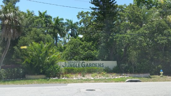 20170529 133359 Picture Of Sarasota Jungle Gardens Sarasota Tripadvisor