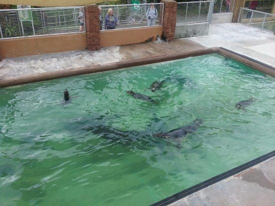 Gweek, UK: Seals