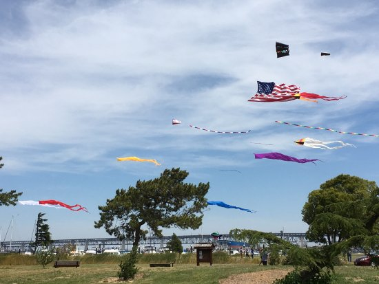 Kites Flying Over Martinez Regional Shoreline Trail