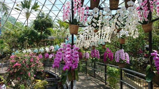 Nanbu-cho, Japón: 温室内