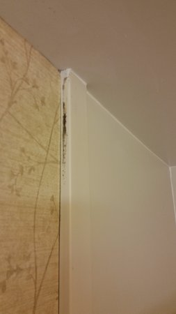 Hampton Inn Roanoke / Hollins / I-81: (Room 116) Mildew on shower stall