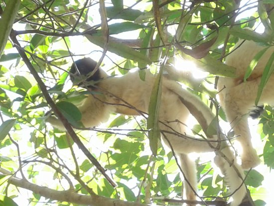 Lemurs Park : 20170527_150036_large.jpg