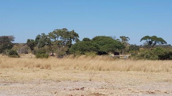 North-West District, Botswana: Bush Veld