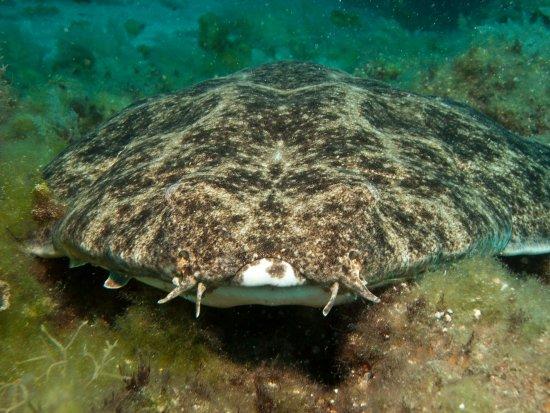 Aquasport Diving: Requin ange