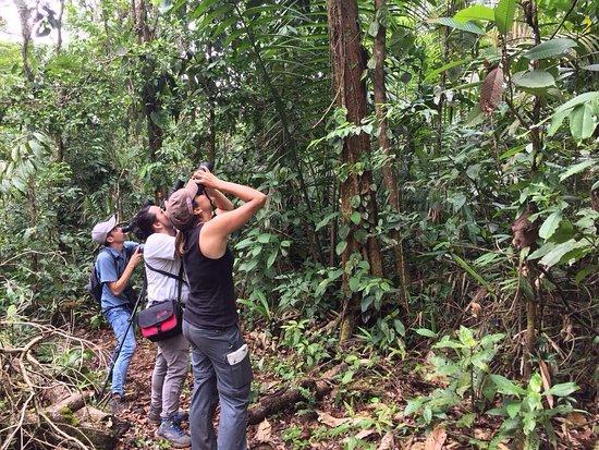 Boca Tapada, Kosta Rika: IMG-20170530-WA0001_large.jpg