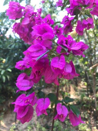 Vallarta Botanical Gardens : photo1.jpg