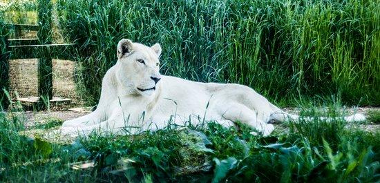Smarden, UK: White Lion