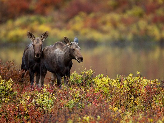 Wildlife viewing is just one of the highlights of a visit to the Yukon