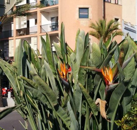 Massif De Fleur Oiseau Du Paradis Picture Of Lloret Beach Lloret