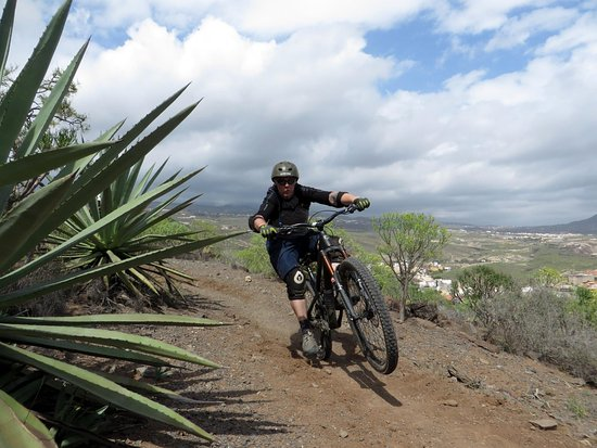 Puntagorda, Spain: Dusty trails and spiky plants!