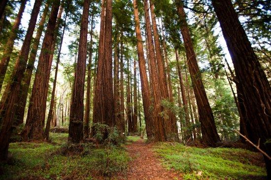 Glen Oaks Big Sur: Hiking on property