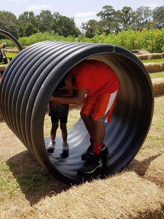 Brooksville, Φλόριντα: Roll the giant tubes in a maze made of hay bales