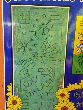 Brooksville, FL: Map of the sunflower maze