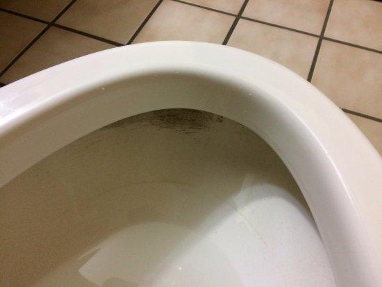 Lebanon, IN: Dirty Toilet