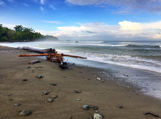 Pavones, كوستاريكا: Just next door - epic location!